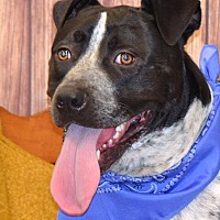 Adopt A Pet :: Jethro - Albemarle, NC