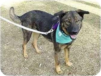 Labrador Retriever Mix Dog for adoption in San Diego, California - Mac