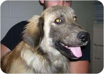 Collie Mix Dog for adoption in Osceola, Arkansas - Johnson