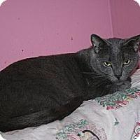 Adopt A Pet :: Teddy - Santa Rosa, CA
