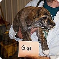 Adopt A Pet :: GiGi - Conway, AR
