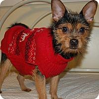 Adopt A Pet :: Snookie~Prison Obedience Train - Hazard, KY