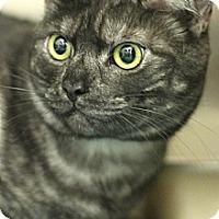 Adopt A Pet :: Jay - Sacramento, CA