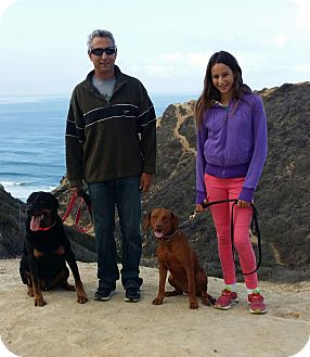 Rottweiler Dog for adoption in El Cajon, California - Scotty