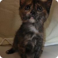 Adopt A Pet :: Roo - Reston, VA