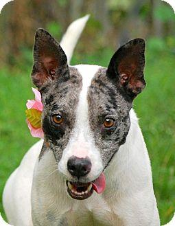 Catahoula Leopard Dog Mix Dog for adoption in Pawleys Island, South Carolina - Pepper
