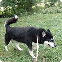 Adopt A Pet :: Chuck - Augusta County, VA