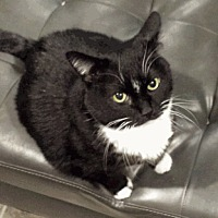 Adopt A Pet :: VINNIE - Bloomingburg, NY