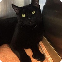Adopt A Pet :: Clara - East Brunswick, NJ