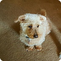 Adopt A Pet :: Mista Frank - Freeport, NY