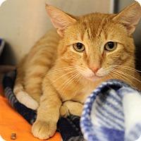Adopt A Pet :: eugene - Muskegon, MI