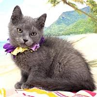 Adopt A Pet :: Clyde - Harrisonburg, VA