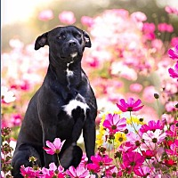Adopt A Pet :: STORMIE - Ellaville, GA