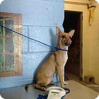 Adopt A Pet :: URGENT on 7/25 SAN BERNARDINO - San Bernardino, CA