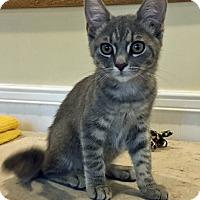 Adopt A Pet :: Quinn - Prescott, AZ