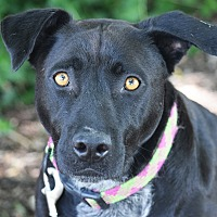 Adopt A Pet :: Anya - Huntley, IL