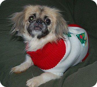 Pekingese Dog for adoption in Hazard, Kentucky - Baby