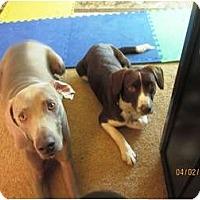 Adopt A Pet :: Macy - Elyria, OH