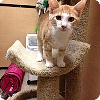 Adopt A Pet :: Lila - Monroe, GA