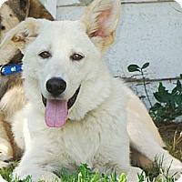 Adopt A Pet :: Louie  *Adopted - Oklahoma City, OK
