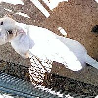 Adopt A Pet :: Katie - Bergheim, TX