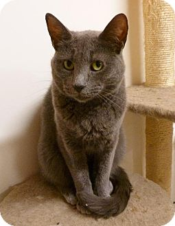 Domestic Shorthair Cat for adoption in Westville, Indiana - Melody