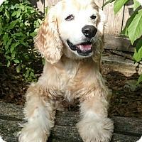 Adopt A Pet :: Beasley - Sugarland, TX