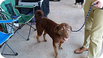 Labrador Retriever Mix Dog for adoption in East Hartford, Connecticut - Sophie - in CT