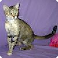 Adopt A Pet :: Penelope - Powell, OH