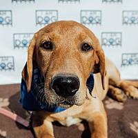 Adopt A Pet :: Heather - Cross Roads, TX