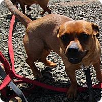 Adopt A Pet :: Greta - Tillamook, OR