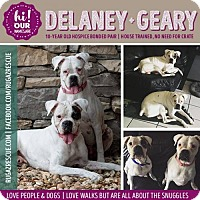 Adopt A Pet :: Delaney and Geary - New Port Richey, FL