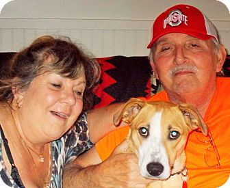 German Shepherd Dog/Labrador Retriever Mix Dog for adoption in Plain City, Ohio - Bailey