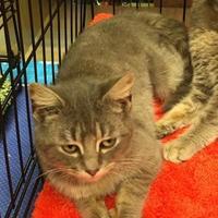 Adopt A Pet :: Sassafrass - McDonough, GA