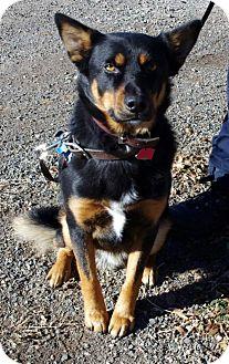Shepherd (Unknown Type)/Shepherd (Unknown Type) Mix Dog for adoption in Alturas, California - Oso