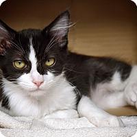 Adopt A Pet :: Logan - Van Nuys, CA