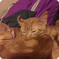 Adopt A Pet :: Flip - Salisbury, NC