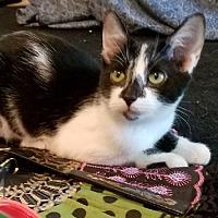Adopt A Pet :: Ann - Yukon, OK