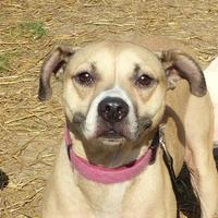 Adopt A Pet :: Mazza - Valley View, OH