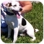 Photo 1 - Jack Russell Terrier Mix Dog for adoption in Somerset, Pennsylvania - Lynn