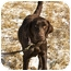Photo 2 - Labrador Retriever Dog for adoption in Crumpler, North Carolina - Willow