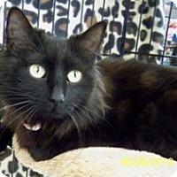 Adopt A Pet :: Jada B - Sacramento, CA