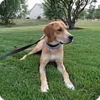 Adopt A Pet :: Patrick - Lewisville, IN
