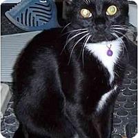 Adopt A Pet :: Isis - Richmond, VA