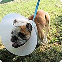 Adopt A Pet :: Doug - Winder, GA
