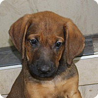 Adopt A Pet :: Thor - PENDING, in Maine - kennebunkport, ME