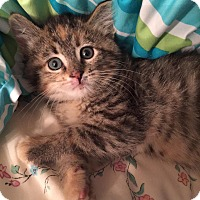 Adopt A Pet :: Arabella - Geneseo, IL