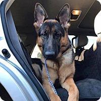 Adopt A Pet :: Rika - Phoenix, AZ