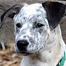 Adopt A Pet :: Mrs B
