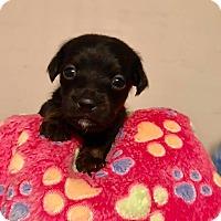 Adopt A Pet :: Jarek - North Brunswick, NJ